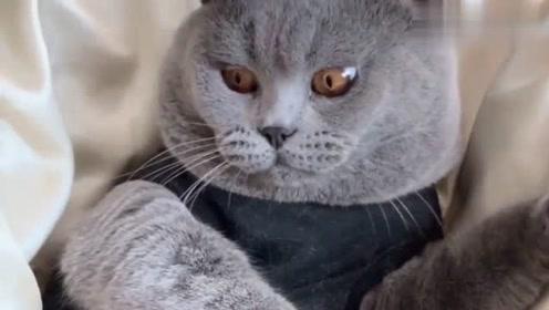 小猫咪不给摸,男主人说要拔它的牙,小猫咪的反应太好笑了