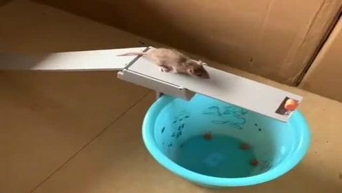 村长给每家每户做的这个,专抓害人的老鼠,简直太好用了!