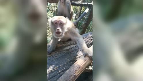 猴子:好家伙!拿我当猴耍是吧?然后高手就出现了