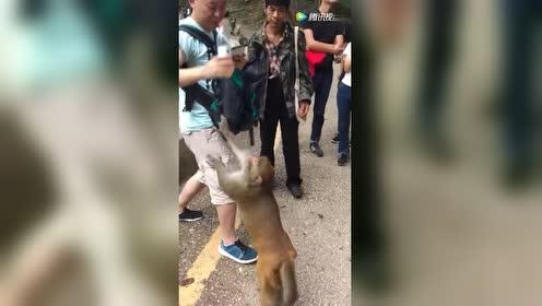 猴山上最会表演的猴子!徒手喝水!完全没问题!