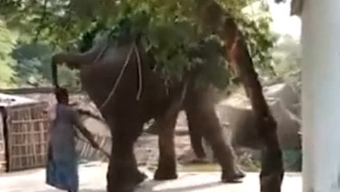 现场!印度大象突然失控发疯 一头撞向路旁拖拉机 身后主人发懵