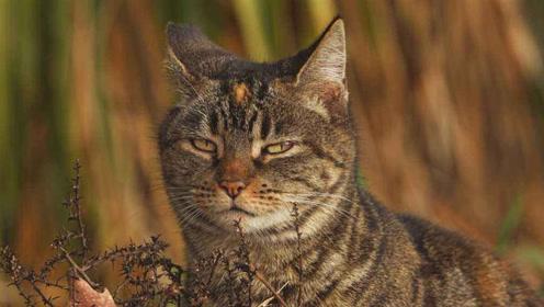 狡猾的猫咪藏在盒中埋伏,等待松鼠来进食!然后突然袭击