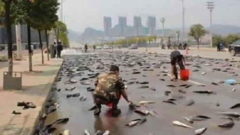 天上不会掉馅饼却会掉鱼,上万条鱼从天而降,一起来见识一下!