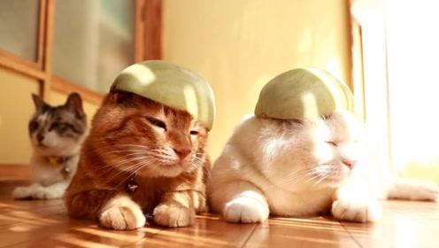 主人给猫主子戴瓜皮帽,小猫一脸不乐意,猫咪:快给我拿走