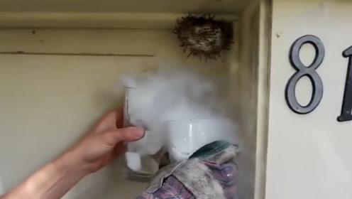 老外恶搞马蜂窝,想用液氮冻住马蜂,最后慌忙逃离现场