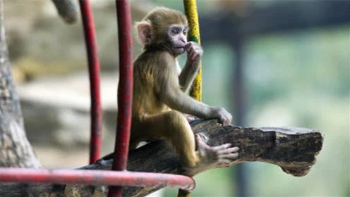 """属猴的""""3大生肖贵人"""",一辈子的""""真爱"""",遇到要好好珍惜"""