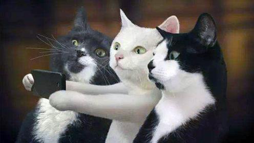 养一只猫觉得会孤单,养两只就嫌烦了,果然猫和猫之间才是真爱