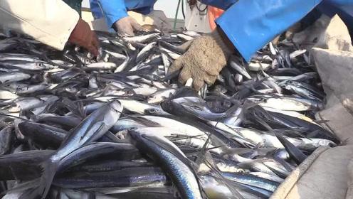水面飞的都是飞鱼,看看渔民的飞鱼捕捞业!