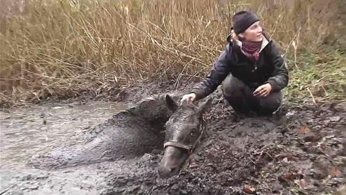 一匹战马被困淤泥,救援队抵达现场后,霸气才刚刚开始!