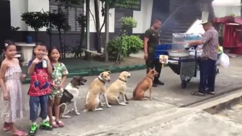 几条流浪狗活出新高度,每天在烧烤摊蹭吃,店主的举动太赞了