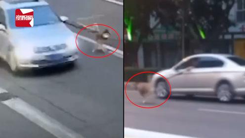 四川一司机开车牵绳遛狗被处罚,神回复:狗毛没干,怕弄湿车