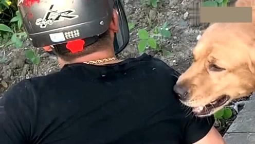 主人开车掉到沟里,金毛看见后找路人把主人救出,不愧是搜救犬