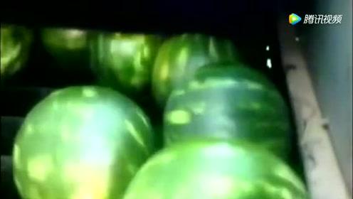 西瓜生产流水线,没错这就是生产