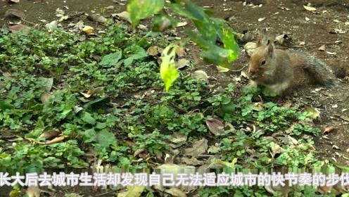 《小森林夏秋篇》的美食诱惑如何能抵挡!