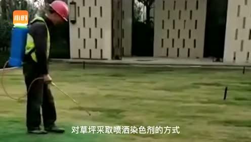 为了给收房的业主增加满意度,开发商将草坪喷成绿色
