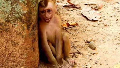 一只奇怪的猴子,蹲在石头边不停的哭泣着,眼神令人心碎