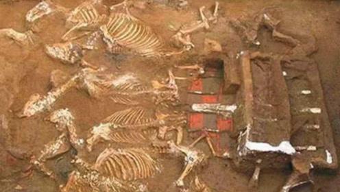 秦始皇祖母墓被打开,墓中出土一灭绝动物,引起了外界轰动