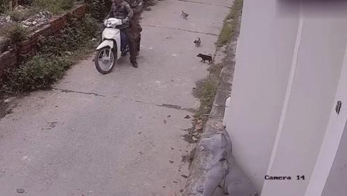 偷狗贼作案过程曝光,一人开车一人射狗,太可恶了!