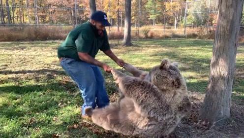 一只成年狗熊非要男子抱着,居然赖在地上不起来,男子的反应超搞笑