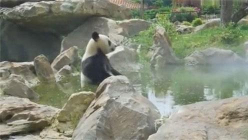 大熊猫这是在修行吧,仙气飘飘!