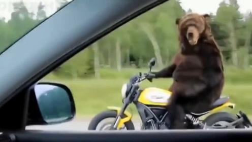 """战斗民族的""""棕熊""""不一般,骑摩托高速路飙车"""