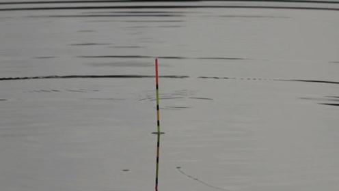 钓鱼:鱼口太快也不好,钓的都有点不会抓口了!