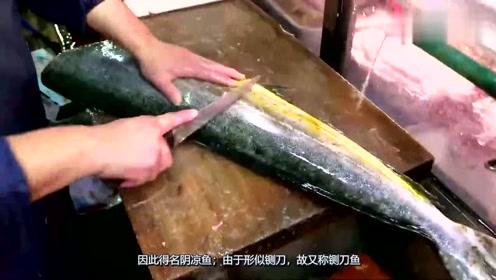 头一次见这种鲯鳅鱼,看日本大厨是怎么处理的场面令人佩服