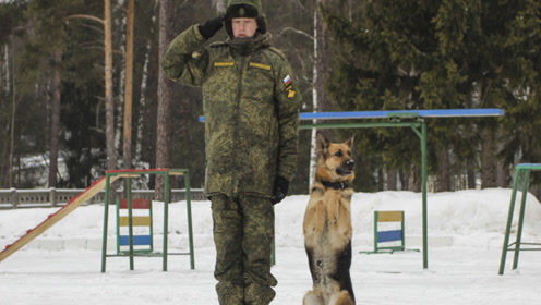 退伍军犬一旦确认无用后,处理方法让人心疼,网友:怎么忍心呢?