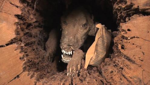一只被困在树洞里60年的狗,多次试图离开树洞,但却被树洞卡死!