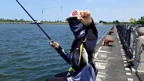 前打钓鱼,厚鲈鱼,黄尾瓜鱼,龙虎斑鱼,小鱼拉倒不要不要的