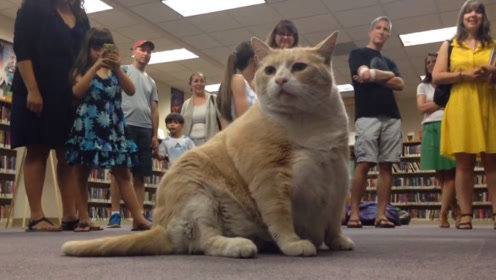 """书店老板好心收留的流浪橘猫,没想到是一只""""招财猫""""!"""
