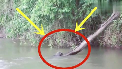 男子野外钓鱼时,突然意外发现这一幕,深山老林都这么诡异!