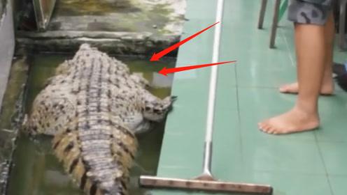 """国外男子散养一只""""猪鳄"""",给它搓澡时不淡定了:这就是只祖宗!"""