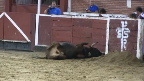 一头公牛刚放出来,就直接朝护栏冲去,下秒爬不起来了!