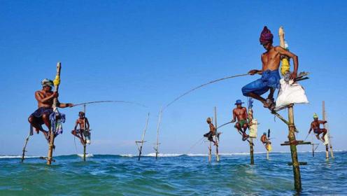 """外国人发明""""姜太公钓鱼法"""",钓鱼不用鱼饵,全靠鱼儿自觉"""