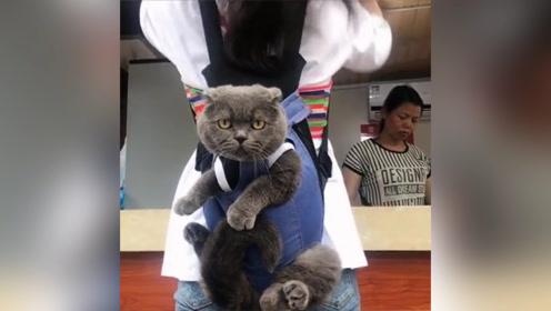 小姐姐背个猫咪出门,这目瞪口呆的样子,像极了隔壁的二哈!