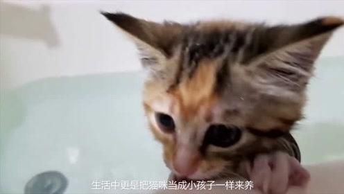 铲屎给猫咪洗澡,猫咪生怕被吹风机吹走,小表情可爱死了