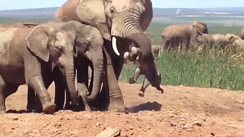 大象用鼻子卷起小象,然后狠狠的摔在了地上,游客看到这一幕不淡定了!