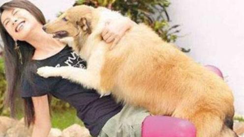 为什么单身的女孩,都喜欢养大型公狗,原因大家都清楚