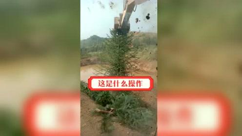 这么高的一棵树,压扁了