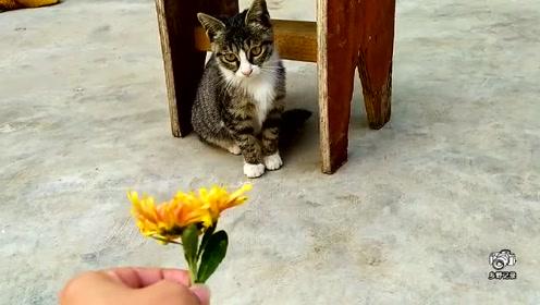 萌宠 记录乡村生活,一只小家猫的惬意喵生!