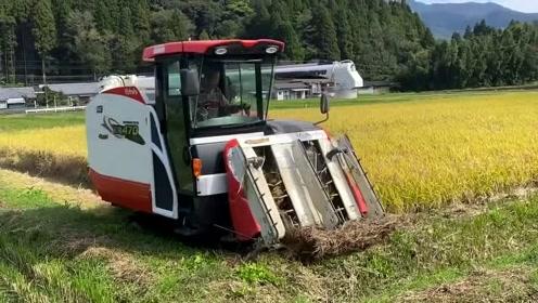 日本农村收割农作物,这种小型收割机真实用,家家户户都普及了