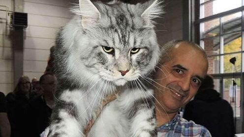 男子捡了只流浪猫,半年时间就一米多高!问了专家才知道赚翻了