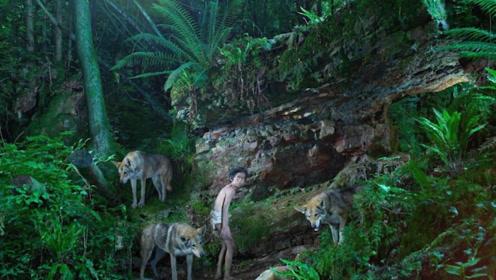 为什么狼遇到人类婴儿后,不仅不会吃掉,还会把婴儿抚养长大?