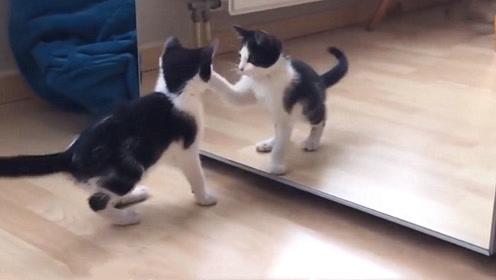 猫咪第一次看到镜子中的自己,会有什么反应?看完忍住别笑!