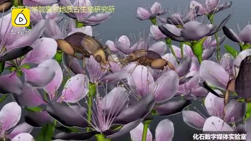 中国学者发现亿年前琥珀花蚤:将虫媒传粉记录提前了5000万年