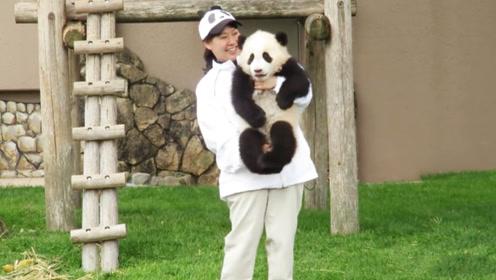 熊团子初到日本,呆在木架上不敢下来,奶妈的举动让人暖心