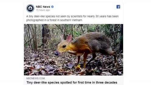 鼠脸?鹿身?消失30年之久银背鼠鹿现身