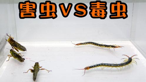 """""""害虫""""VS""""毒虫""""谁更胜一筹呢?没想到是另一番景象"""