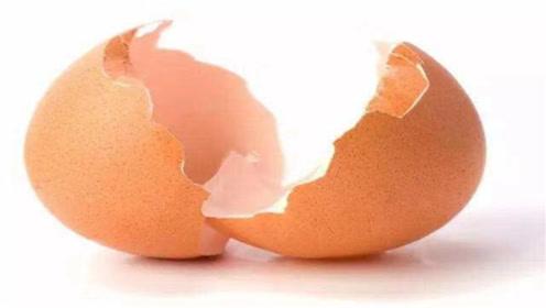养花别再买肥料了,鸡蛋壳才是最好的有机肥,别再不懂了,涨知识